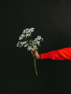 person-holding-white-flowers-in-black-background-3746197